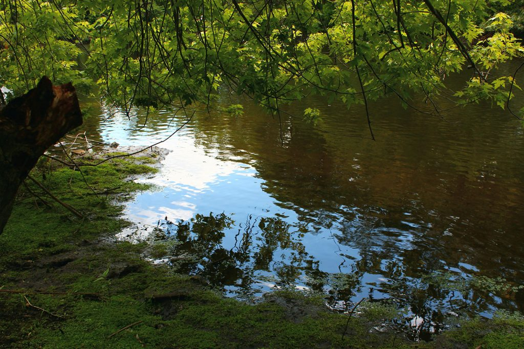 Pawtuxet River from behind Rhodes-on-the-Pawtuxet, photo by Amanda Cardeira