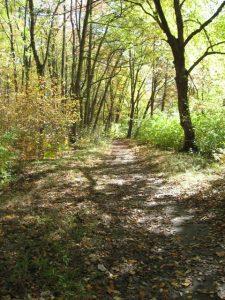 Pawtuxet River Trail