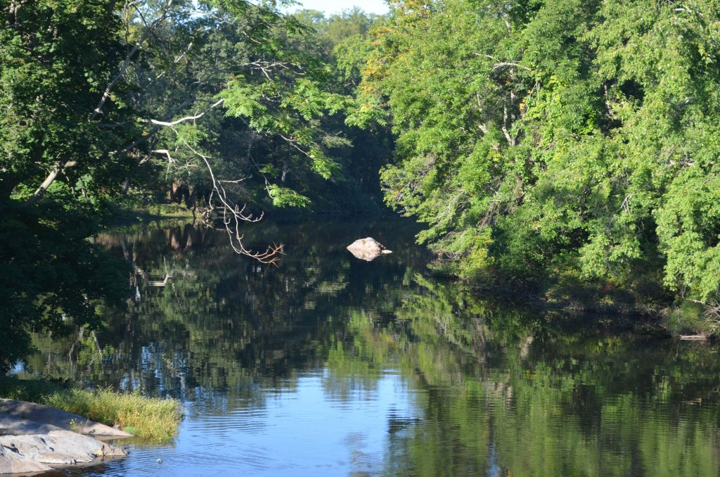 Pawtuxet River green; photo by Lynne Harrington