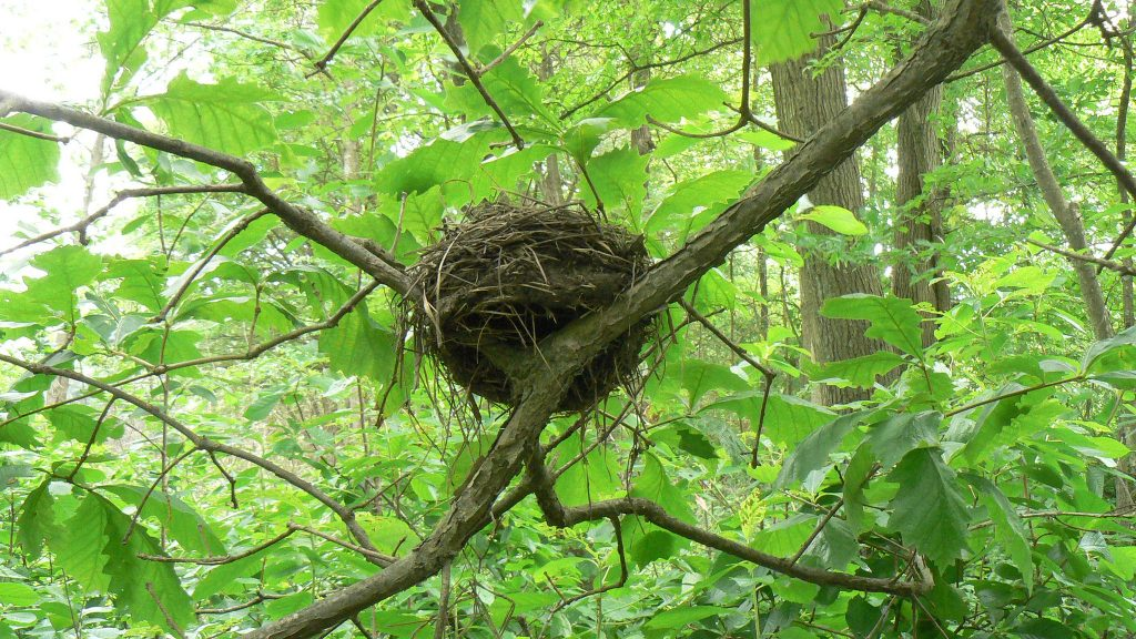 Nest on the Pawtuxet River Trail; photo by Josh Wood